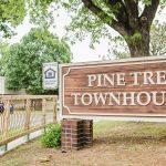 Pine Tree-9